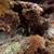 trópusi · Vörös-tenger · hal · tájkép · tenger · háttér - stock fotó © stephankerkhofs