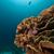 elefante · ouvido · coral · mar · vermelho · peixe · natureza - foto stock © stephankerkhofs