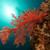 trópusi · vízalatti · díszlet · Vörös-tenger · víz · hal - stock fotó © stephankerkhofs