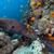 gigante · mar · vermelho · água · peixe · natureza · paisagem - foto stock © stephankerkhofs