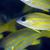 воды · рыбы · океана · синий · жизни - Сток-фото © stephankerkhofs