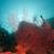 sea fan in the red sea stock photo © stephankerkhofs