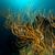 черный · коралловые · воды · рыбы · природы - Сток-фото © stephankerkhofs
