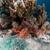 рыбы · природы · пейзаж · морем · фон - Сток-фото © stephankerkhofs
