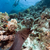 óriás · trópusi · Vörös-tenger · hal · tájkép · tenger - stock fotó © stephankerkhofs