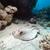 рыбы · мелкий · пляжей · выстрел - Сток-фото © stephankerkhofs