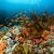 vis · tropische · rode · zee · water · landschap · zee - stockfoto © stephankerkhofs