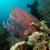 морем · вентилятор · подводного · декораций · воды - Сток-фото © stephankerkhofs
