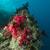 tropische · rode · zee · vis · natuur · landschap · zee - stockfoto © stephankerkhofs