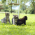 gatitos · jugando · hierba · ojo · verde - foto stock © stokkete