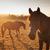 horses grazing at sunset stock photo © stokkete