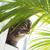 кошки · диван · красный · глазах · домой · расслабиться - Сток-фото © stokkete