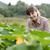 jeans · abobrinha · orgânico · legumes · agricultores · mãos - foto stock © stokkete