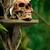 aviso · selva · velho · crânio · serpente - foto stock © stokkete