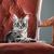 filhotes · de · cachorro · gatinho · branco · cão · gato · grupo - foto stock © stokkete
