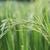 campo · estoque · foto · natureza · folha · planta - foto stock © stoonn