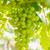 fruto · enforcamento · videira · verde · folhas - foto stock © stoonn