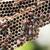 vespa · nido · vuota · sfondo · costruzione - foto d'archivio © stoonn