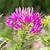 örümcek · çiçek · avcılık · ıslak · yaz · damla - stok fotoğraf © stoonn