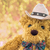 close up cowboy teddy bear stock photo © stoonn