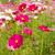 roze · paars · bloemen · voorjaar · weide · bloem - stockfoto © stoonn