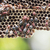 vespa · nido · costruzione · esterno · muri · legno - foto d'archivio © stoonn