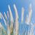 fű · kék · ég · toll · természet · égbolt · kert - stock fotó © stoonn