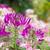 pók · virág · kert · növény - stock fotó © stoonn