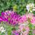 pók · virág · növény · természet · kert · zöld - stock fotó © stoonn