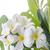 lan · flor · belo · laranja · Tailândia · flores - foto stock © stoonn