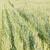 hierba · verde · vista · luz · del · sol · primavera · naturaleza - foto stock © stoonn