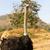 首 · リュウゼツラン · 表示 · 青 · 自然 - ストックフォト © stoonn