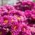 fiore · rosa · pattern · floreale · macro · primavera · design - foto d'archivio © stoonn