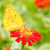 kolibri · etetés · napraforgó · tavasz · erdő · szépség - stock fotó © stoonn