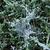 pókháló · fagy · pók · fedett · természet · tél - stock fotó © suerob
