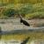 zwarte · ooievaar · hout · vis · schoonheid · zomer - stockfoto © suerob