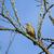 muguet · nature · sol · arbre - photo stock © suerob