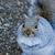grey squirrel stock photo © suerob