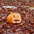 Pumpkin and Leaves stock photo © suerob