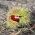 tatlı · kestane · zemin · dış · kabuk · Noel - stok fotoğraf © suerob