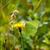 kelebek · görüntü · makro · çiçekler · doğa · hayvan - stok fotoğraf © suerob