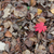 Autumn Leaves stock photo © suerob