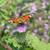 павлин · зеленый · саду · фон · танцы · птица - Сток-фото © suerob