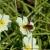 vliegen · shot · tonen · vergadering · bloem · natuur - stockfoto © suerob