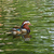 mandarin duck and ripples stock photo © suerob