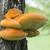 オレンジ · 菌 · 成長 · ツリー · 森 · 自然 - ストックフォト © suljo