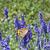 borboleta · campo · de · lavanda · pequeno · branco · paisagem · campo - foto stock © suljo