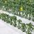 成長 · パプリカ · キュウリ · 温室 · 農業 · 業界 - ストックフォト © suljo
