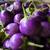небольшой · Purple · баклажан · азиатских · потребление - Сток-фото © sundaemorning