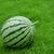 Watermelon stripe skin stock photo © sundaemorning